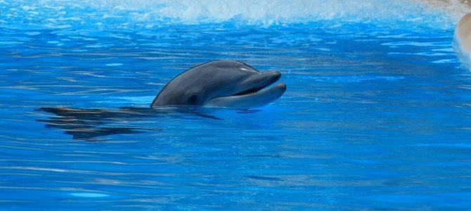 Delfiny butlonose – zobaczysz je w Adriatyku!