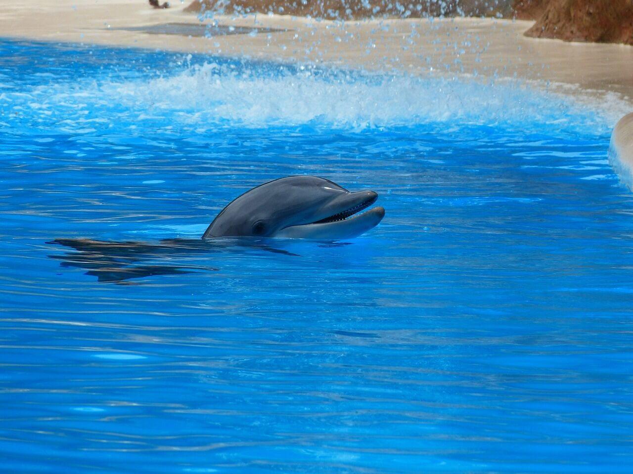 delfin butlonosy w wodach Adriatyku